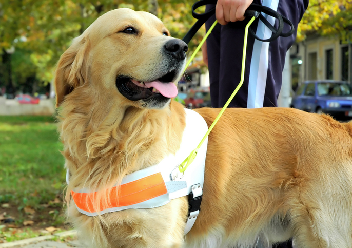 Service Dogs & Housing - Know Your Rights