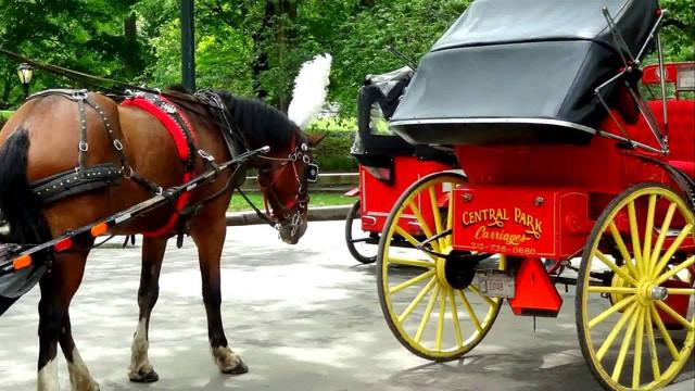 New York City Horse Carriage Rides.jpg